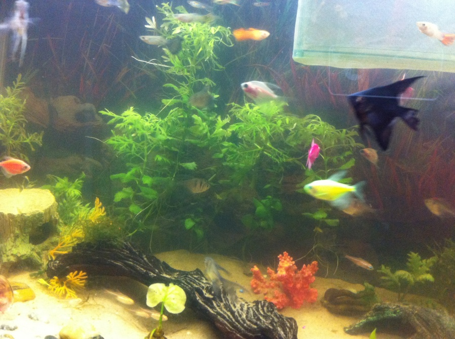 Click image for larger version  Name:my 29 gal.jpg Views:47 Size:250.1 KB ID:248071