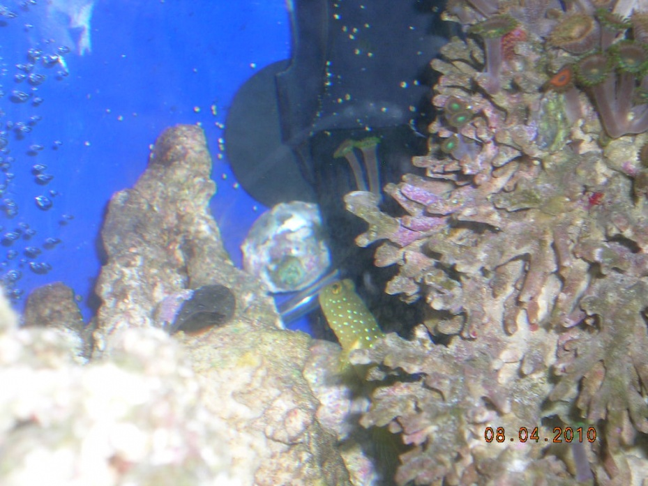 Click image for larger version  Name:goby 003.jpg Views:51 Size:209.7 KB ID:24885