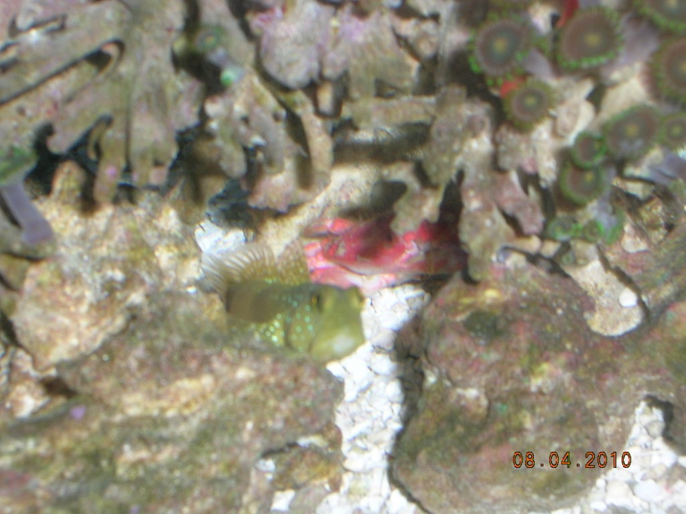 Click image for larger version  Name:goby 005.jpg Views:57 Size:202.4 KB ID:24886