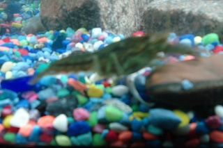 Click image for larger version  Name:aquarium pics 007.jpg Views:70 Size:173.9 KB ID:25031