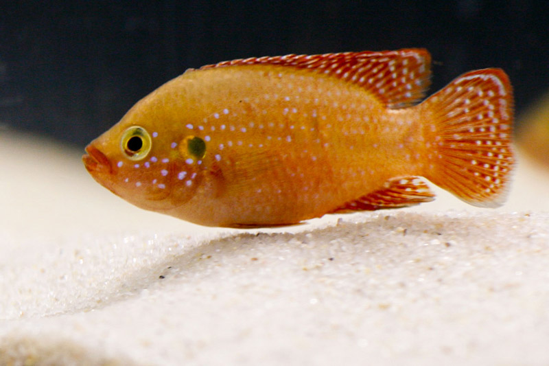 Click image for larger version  Name:mystery-fish-16.jpg Views:48 Size:93.4 KB ID:250472