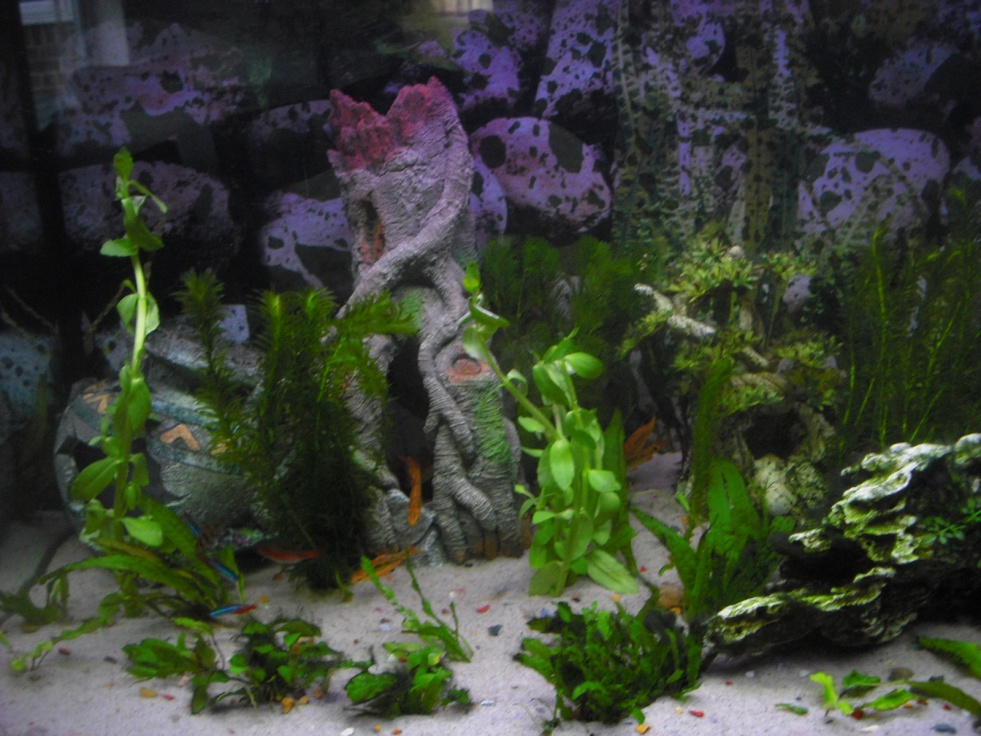 Click image for larger version  Name:Fishies 015.jpg Views:63 Size:250.9 KB ID:251927