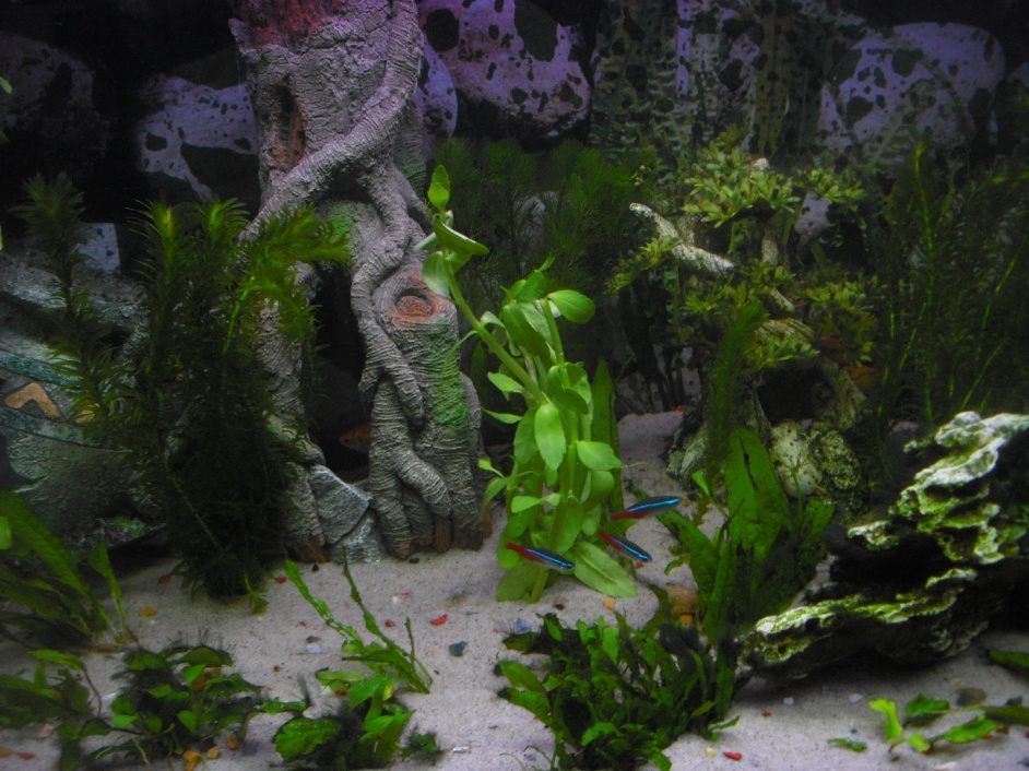 Click image for larger version  Name:Fishies 021.jpg Views:61 Size:255.3 KB ID:251929