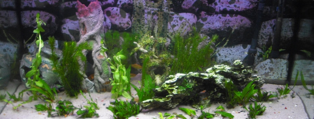 Click image for larger version  Name:Fishies 017.jpg Views:56 Size:159.7 KB ID:251930