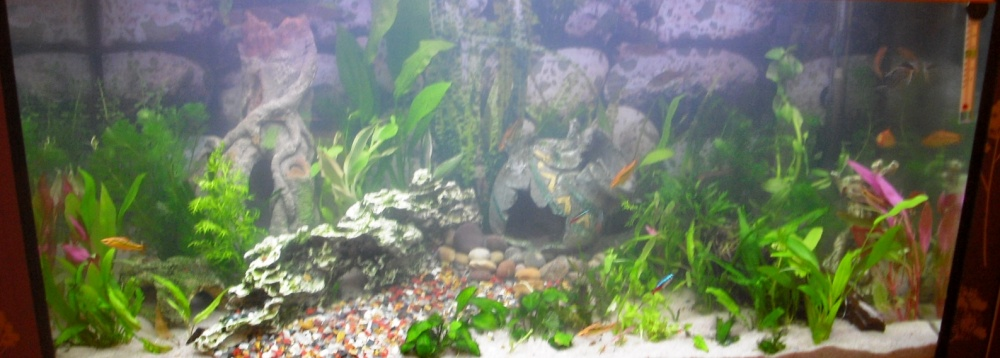 Click image for larger version  Name:Fishies 058.jpg Views:54 Size:132.2 KB ID:252126