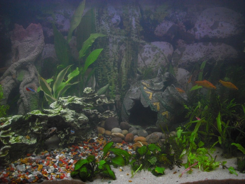 Click image for larger version  Name:Fishies 074.jpg Views:52 Size:251.5 KB ID:252127