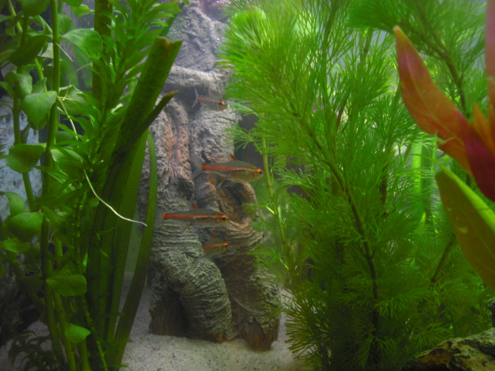 Click image for larger version  Name:Fishies 072.jpg Views:55 Size:249.3 KB ID:252133