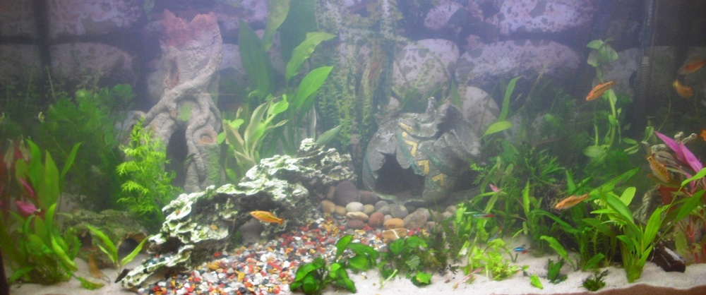 Click image for larger version  Name:Fishies 057.jpg Views:56 Size:161.8 KB ID:252136