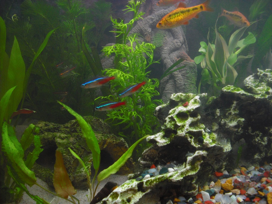 Click image for larger version  Name:Fishies 063.jpg Views:64 Size:255.8 KB ID:252137