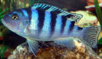 Name:   ImageUploadedByAquarium Advice1412970098.624653.jpg Views: 50 Size:  24.5 KB
