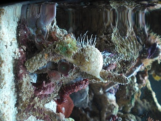 Click image for larger version  Name:aquarium 002.jpg Views:55 Size:215.9 KB ID:25286