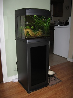 Click image for larger version  Name:fish 001.jpg Views:43 Size:104.5 KB ID:25612