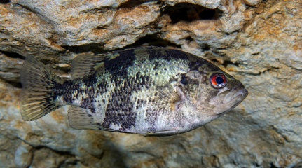 Click image for larger version  Name:fish 3.jpg Views:96 Size:65.3 KB ID:257412