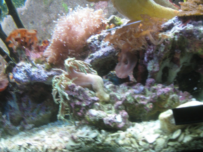 Click image for larger version  Name:sick coral.jpg Views:49 Size:205.8 KB ID:25865