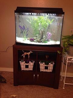New 36 gallon bowfront aquarium advice aquarium forum for National geographic fish tank filter