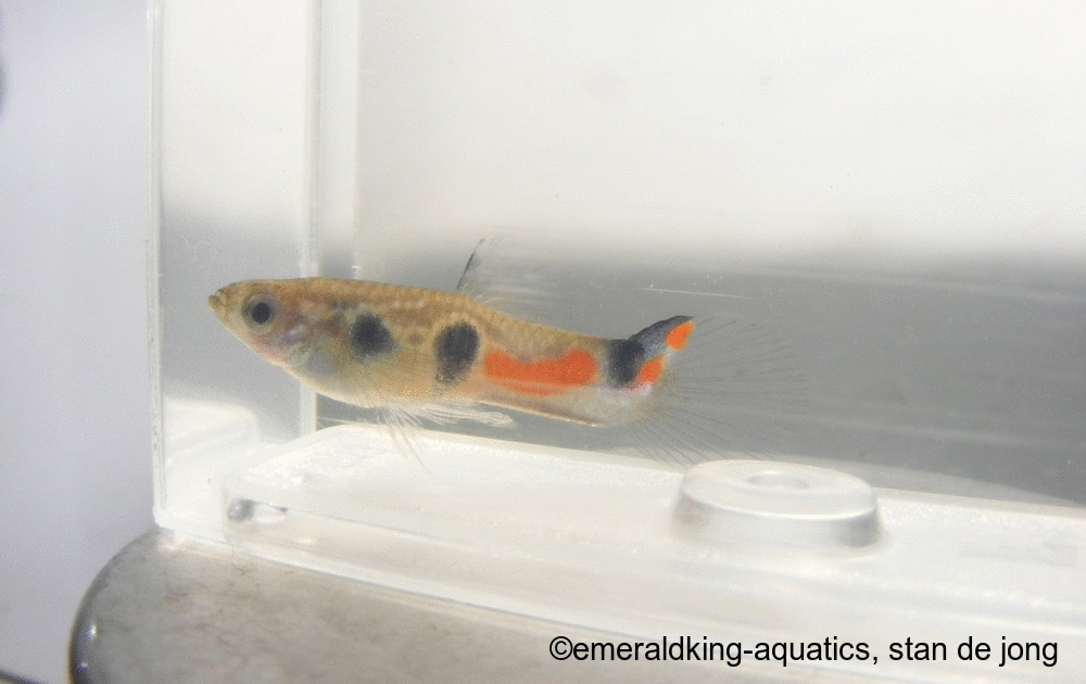 Click image for larger version  Name:fish stan ea 013.jpg Views:99 Size:137.0 KB ID:262003