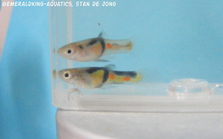 Click image for larger version  Name:fish stan ea1 044.jpg Views:89 Size:64.4 KB ID:262006