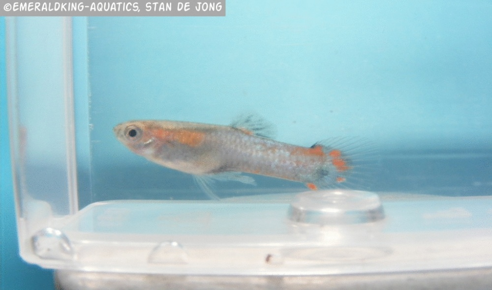 Click image for larger version  Name:fish stan ea1 071.jpg Views:92 Size:135.8 KB ID:262007