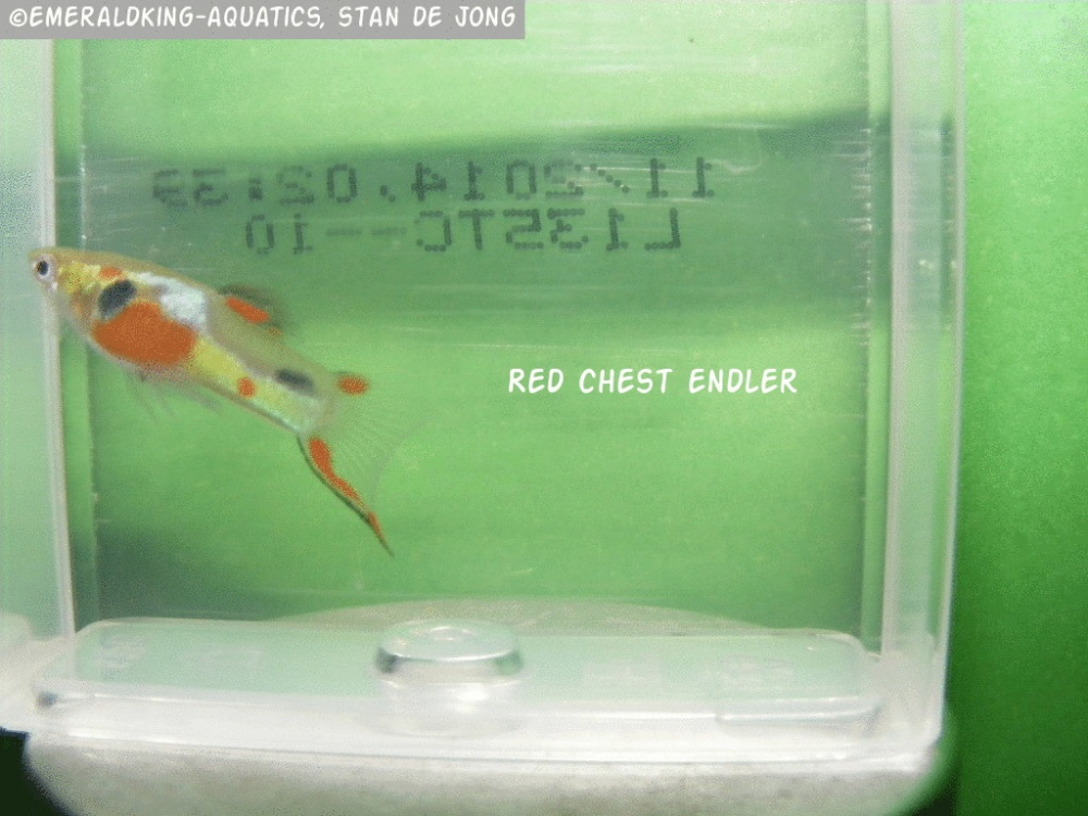 Click image for larger version  Name:fish stan ea1 143a.jpg Views:88 Size:224.3 KB ID:262008