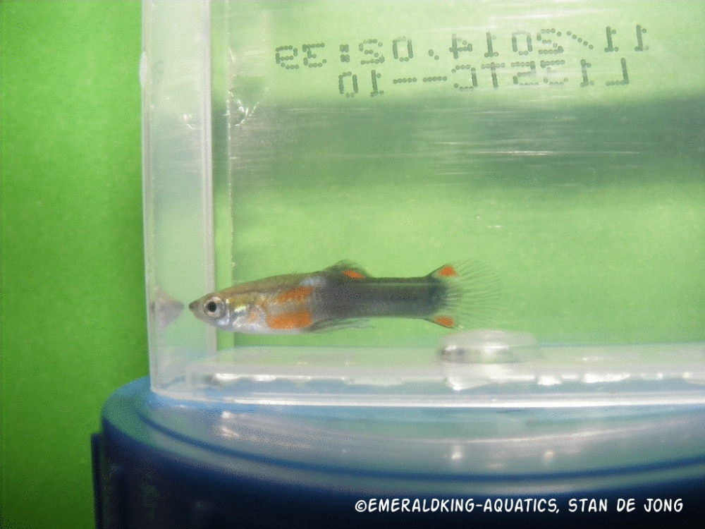 Click image for larger version  Name:fish stan ea2 093.jpg Views:70 Size:217.9 KB ID:262015
