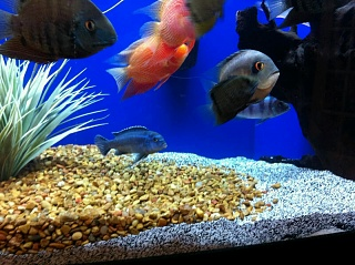 Click image for larger version  Name:Fish1.jpg Views:117 Size:109.9 KB ID:26426