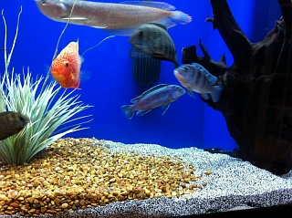 Click image for larger version  Name:Fish2.jpg Views:114 Size:118.3 KB ID:26427