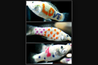 Name:   ImageUploadedByAquarium Advice1425186880.736712.jpg Views: 50 Size:  46.6 KB
