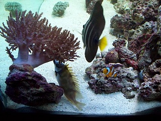Click image for larger version  Name:fish 022.jpg Views:110 Size:65.3 KB ID:26689