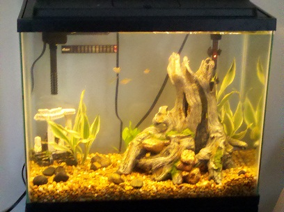 Click image for larger version  Name:fish_tank.jpg Views:97 Size:60.2 KB ID:26699