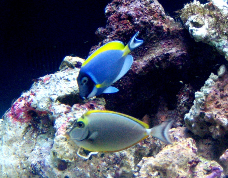 Click image for larger version  Name:2littleFishies.jpg Views:279 Size:215.1 KB ID:26836