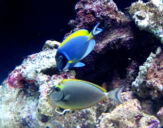 Click image for larger version  Name:2littleFishies.jpg Views:284 Size:215.1 KB ID:26836