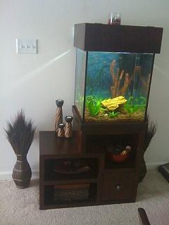 New 37 gallon column freshwater aquarium aquarium advice for Column fish tank