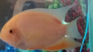 Click image for larger version  Name:fish20150423_104339.jpg Views:67 Size:117.1 KB ID:270766