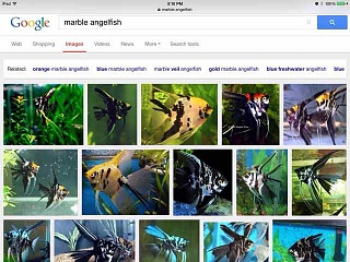 Click image for larger version  Name:ImageUploadedByAquarium Advice1430694707.933170.jpg Views:46 Size:42.1 KB ID:271571
