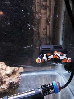 Name:   ImageUploadedByAquarium Advice1432346157.072964.jpg Views: 178 Size:  11.0 KB