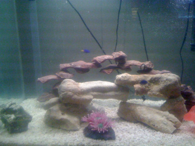 Click image for larger version  Name:55gallon tank.jpg Views:47 Size:87.3 KB ID:27371