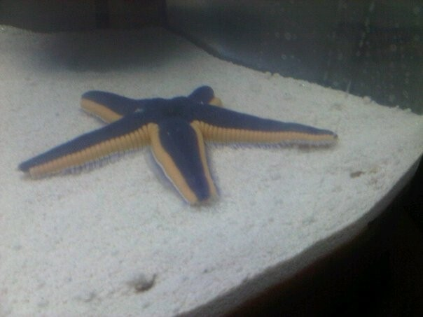 Click image for larger version  Name:starfish.jpg Views:47 Size:38.9 KB ID:27372