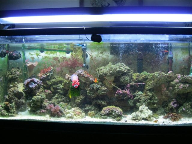 Click image for larger version  Name:Tank View.jpg Views:62 Size:166.6 KB ID:27386