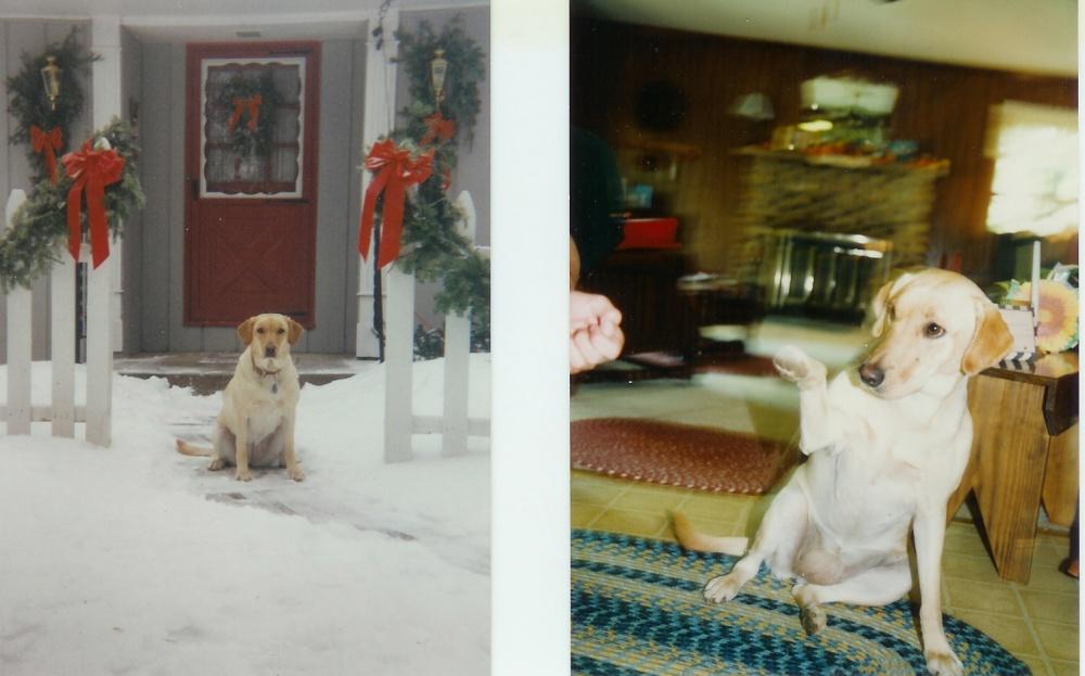Click image for larger version  Name:sadie at Christmas 1.jpg Views:71 Size:170.2 KB ID:27442