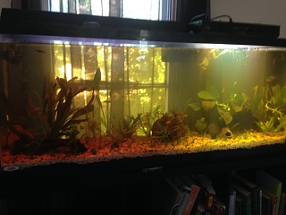 Click image for larger version  Name:fish tank four.jpg Views:49 Size:197.9 KB ID:274689