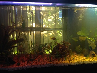 Click image for larger version  Name:fish tank two.jpg Views:46 Size:233.6 KB ID:274691