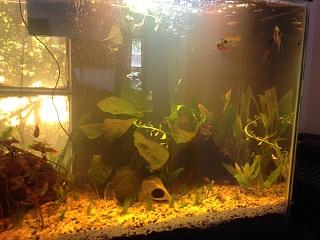 Click image for larger version  Name:fish tank three.jpg Views:52 Size:227.7 KB ID:274692