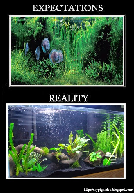 Click image for larger version  Name:expectation-reality.jpg Views:80 Size:106.3 KB ID:275601