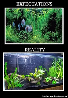 Click image for larger version  Name:expectation-reality.jpg Views:86 Size:106.3 KB ID:275601