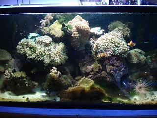 Click image for larger version  Name:aquarium 005.jpg Views:152 Size:212.6 KB ID:27626