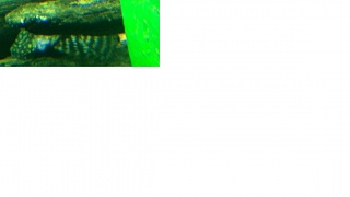 Click image for larger version  Name:pleco1.jpg Views:60 Size:56.5 KB ID:27683