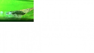 Click image for larger version  Name:pleco3.jpg Views:141 Size:50.2 KB ID:27701