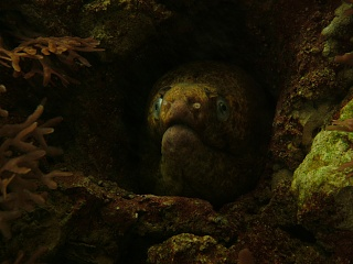 Click image for larger version  Name:moray.jpg Views:109 Size:193.7 KB ID:27725