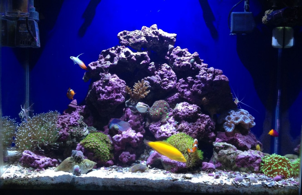 Click image for larger version  Name:10-1-15 reef fish tank.jpg Views:76 Size:241.5 KB ID:278685