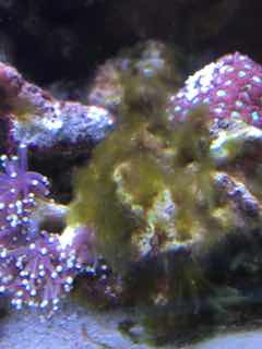Name:   ImageUploadedByAquarium Advice1444330165.653828.jpg Views: 104 Size:  8.4 KB